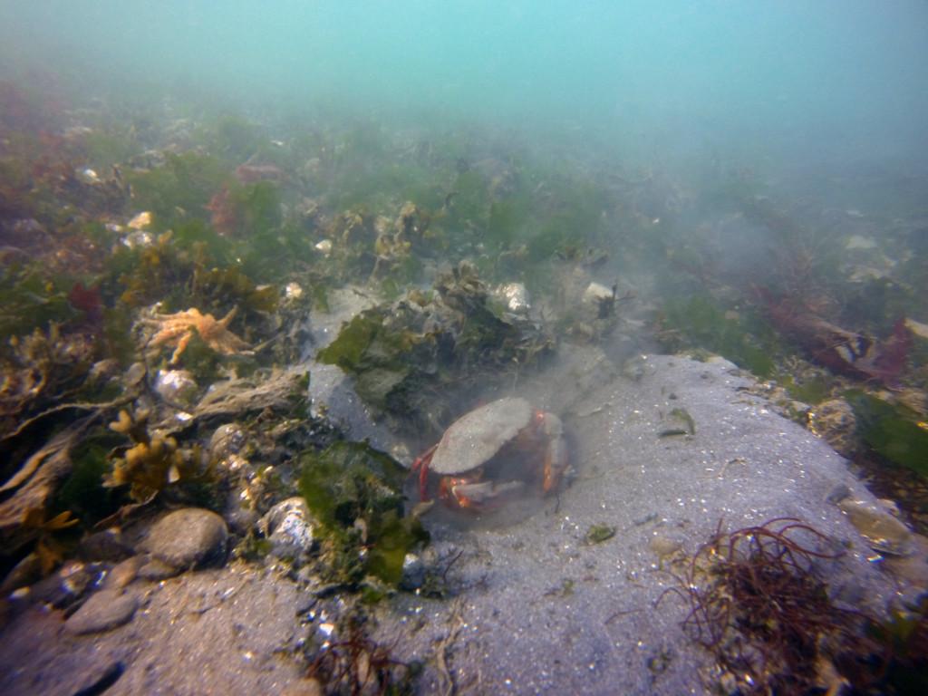 Crab Nest