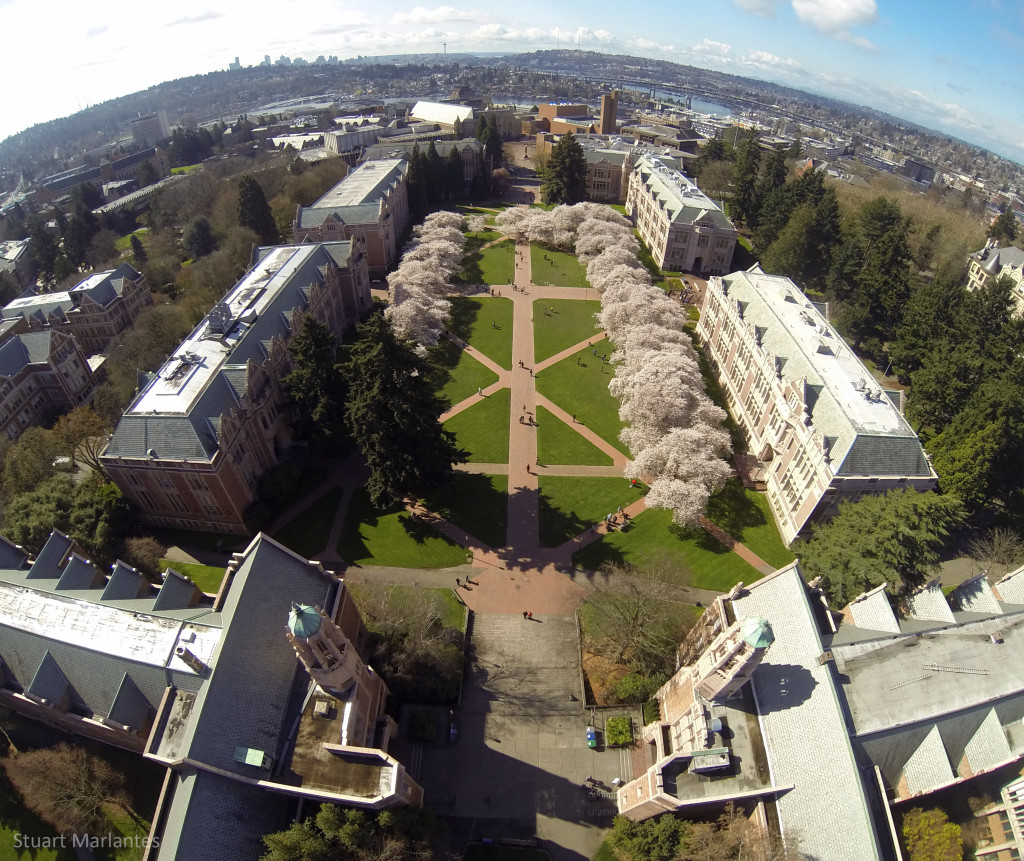 UW Quad Cherry Blossoms