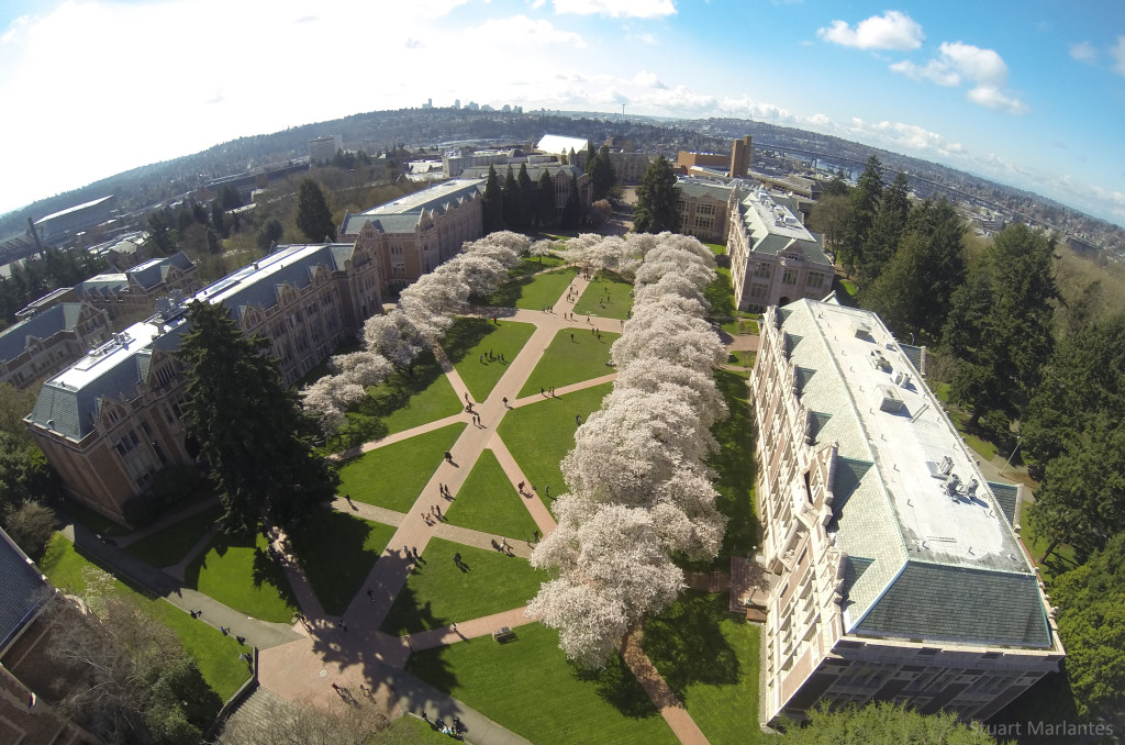The Blossoming Quad